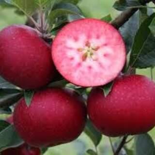 Apple Eater Pink Flesh