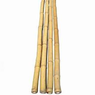 Bamboo Canes 6 ft