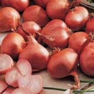 Shallots Red Sun 500 grammes
